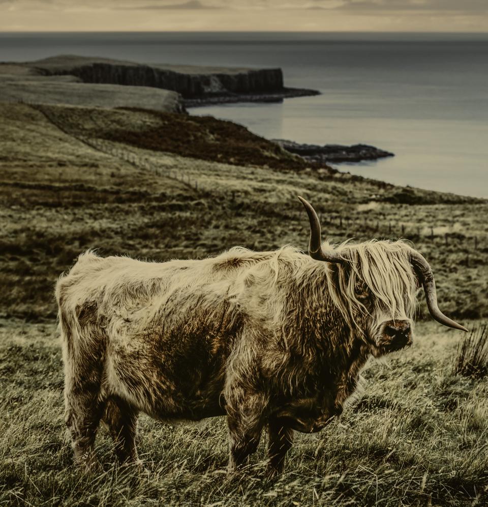 owenperry_scotland_8