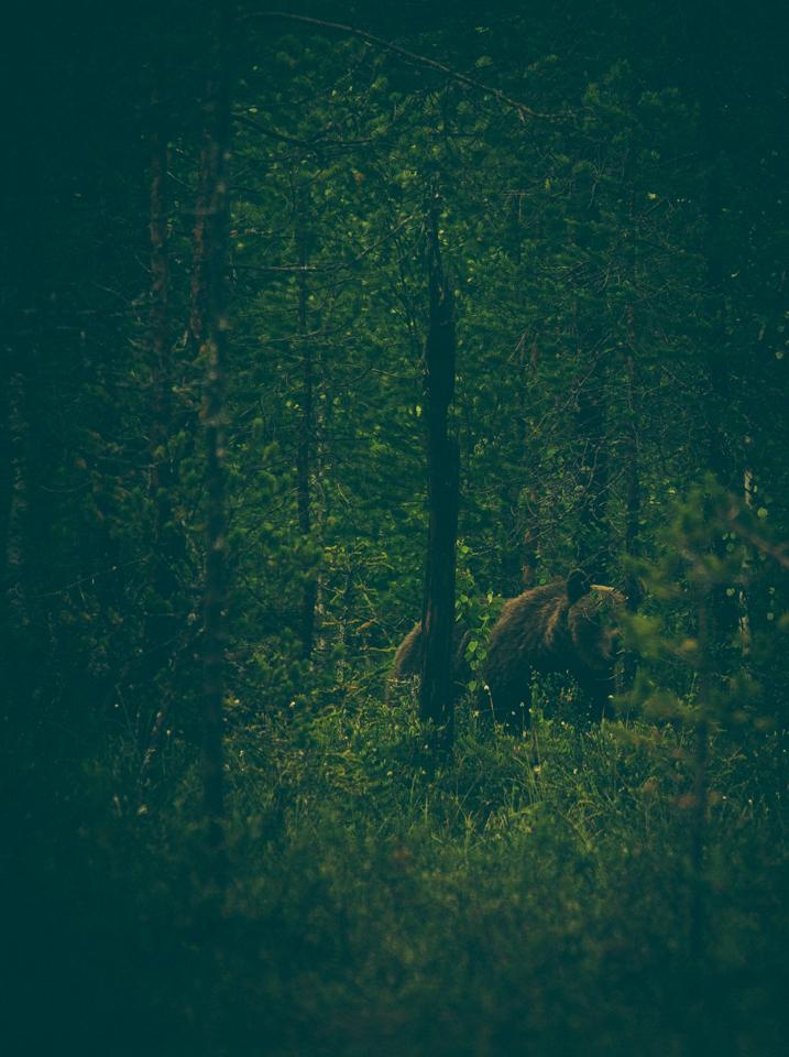 AlexanderKopatz_bears_expbur-001