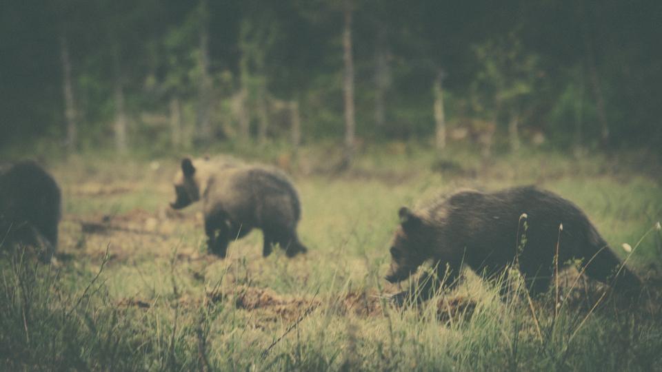 AlexanderKopatz_bears_expbur-002