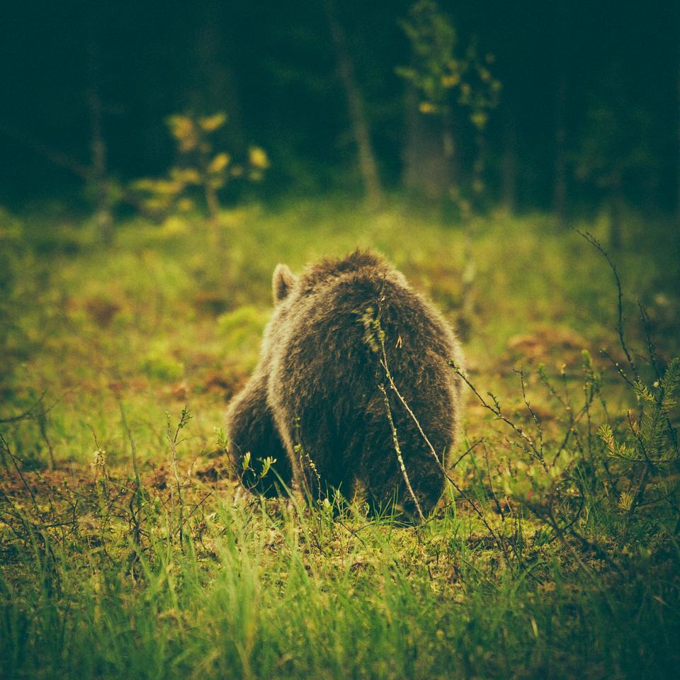 AlexanderKopatz_bears_expbur-003