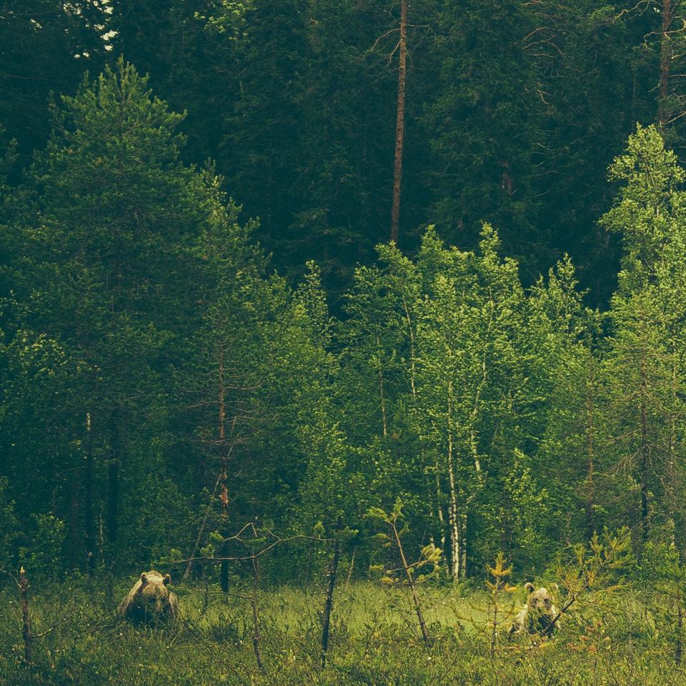 AlexanderKopatz_bears_expbur-005