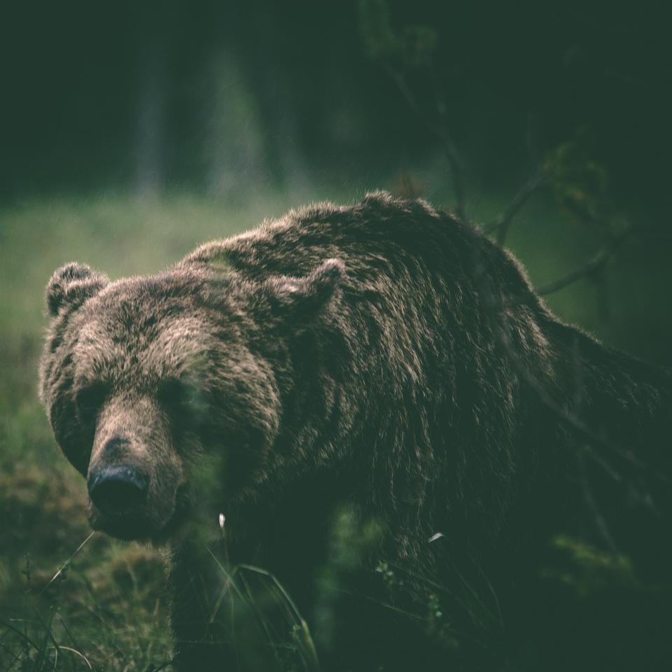 AlexanderKopatz_bears_expbur-006