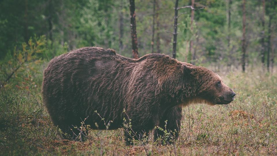 AlexanderKopatz_bears_expbur-007