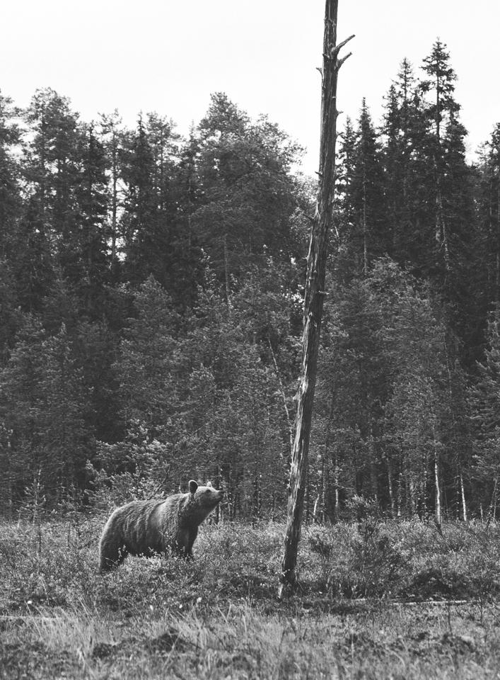AlexanderKopatz_bears_expbur-009