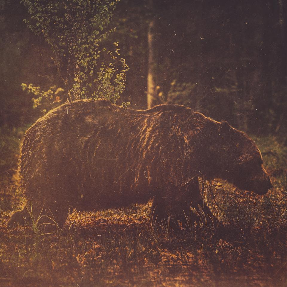 AlexanderKopatz_bears_expbur-010