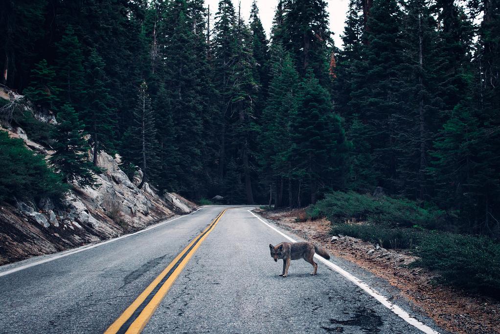 Michael_Lawrence_Mantese_Yosemite1